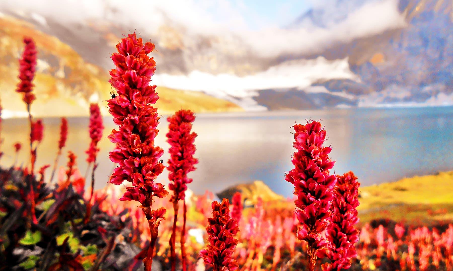 The Queen Lake of Kashmir, Ratti Gali Lake