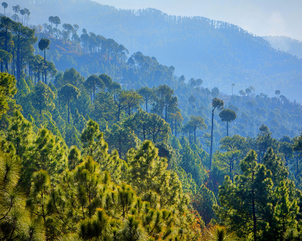 6. Upper Topa and Lower Topa Murree