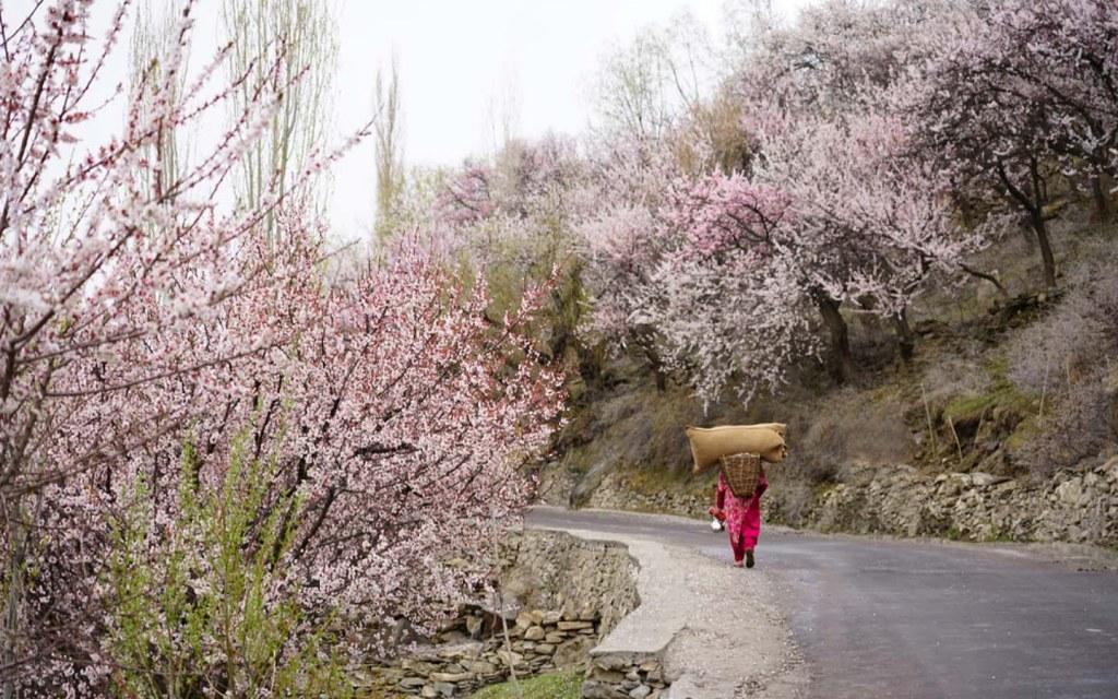 Minapin Village