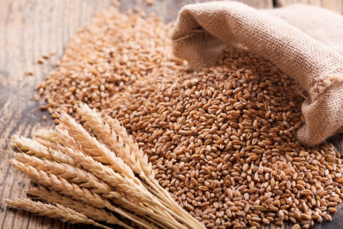 Today Wheat Price in Pakistan